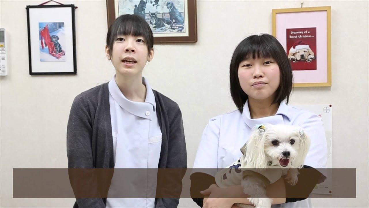 前田 動物 病院