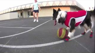 My Dog Plays Better Basketball Than You!