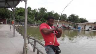 LS fishing pond fight 120kg naga 0123236767