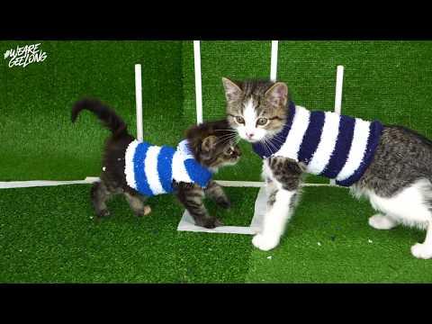 Kittens Playing Football | 2019 Fixture Reveal | Geelong Football Club