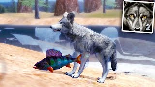 Ultimate Wolf Simulator 2 (by Gluten Free Games) Android Gameplay Part 2