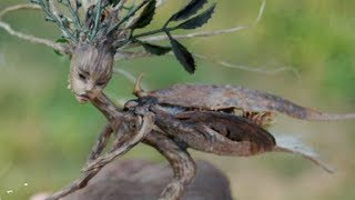 5 Real Fairies Caught on Camera