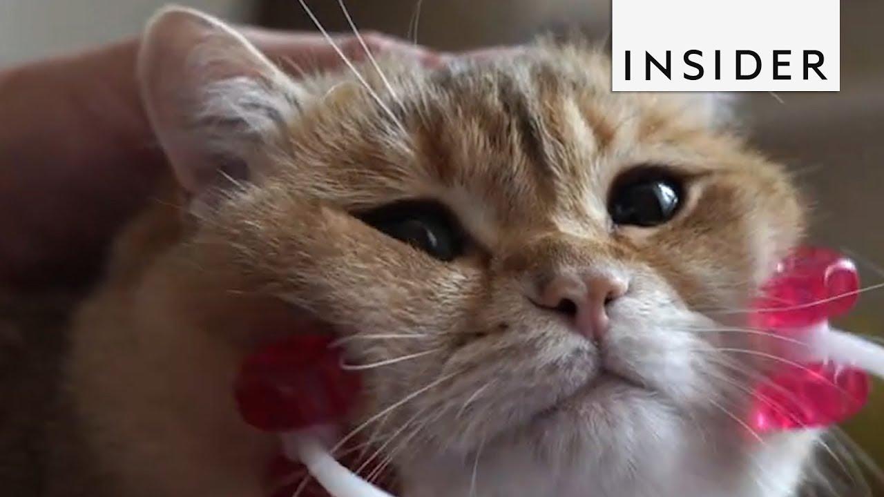 Масажер кој ќе ги усреќи сите мачиња
