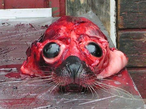 Fukushima, Dead Sea Lions & Pacific Ocean Sadness