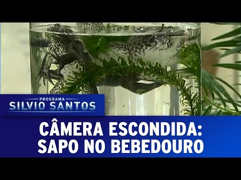 Programa Silvio Santos (04/09/16) - Sapo no Bebedouro