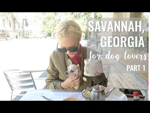 A Dog Lover's Guide To Savannah, GA | Part One