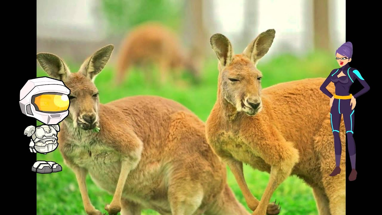 All About Kangaroos: A kids Picture Book About Kangaroos ...