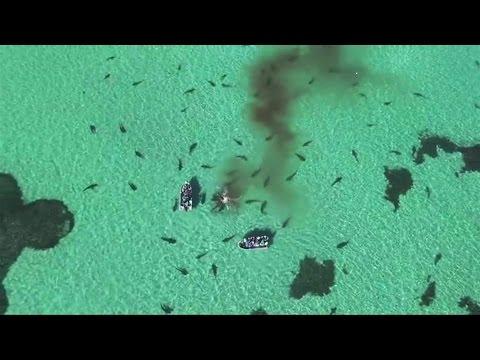 Drone registra ataque