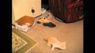 Котенок  играет с большим котом