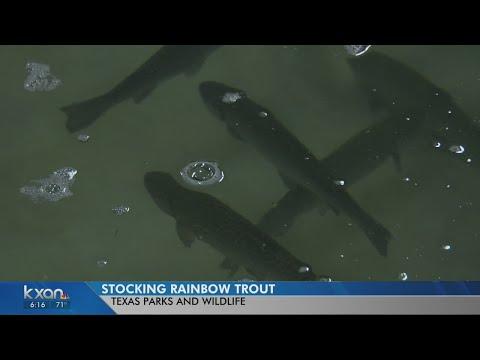 GO FISH: Texas Parks & Wildlife Rainbow Trout Stocking Starts Friday