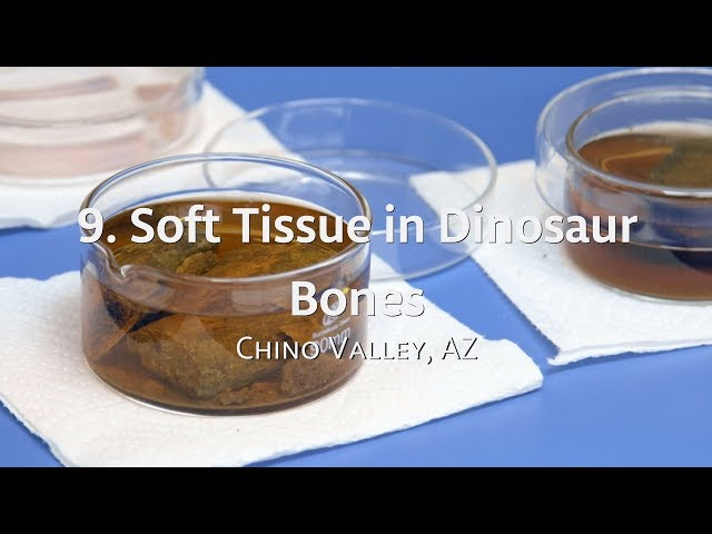 Exploring IGH: 9. Soft Tissue in Dinosaur Bones