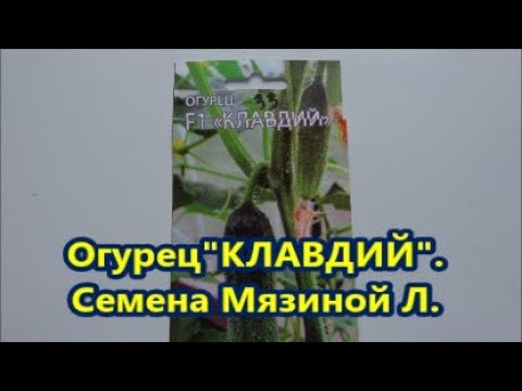"""Огурец """"Клавдий F1"""".Семена Мязиной Л.А."""