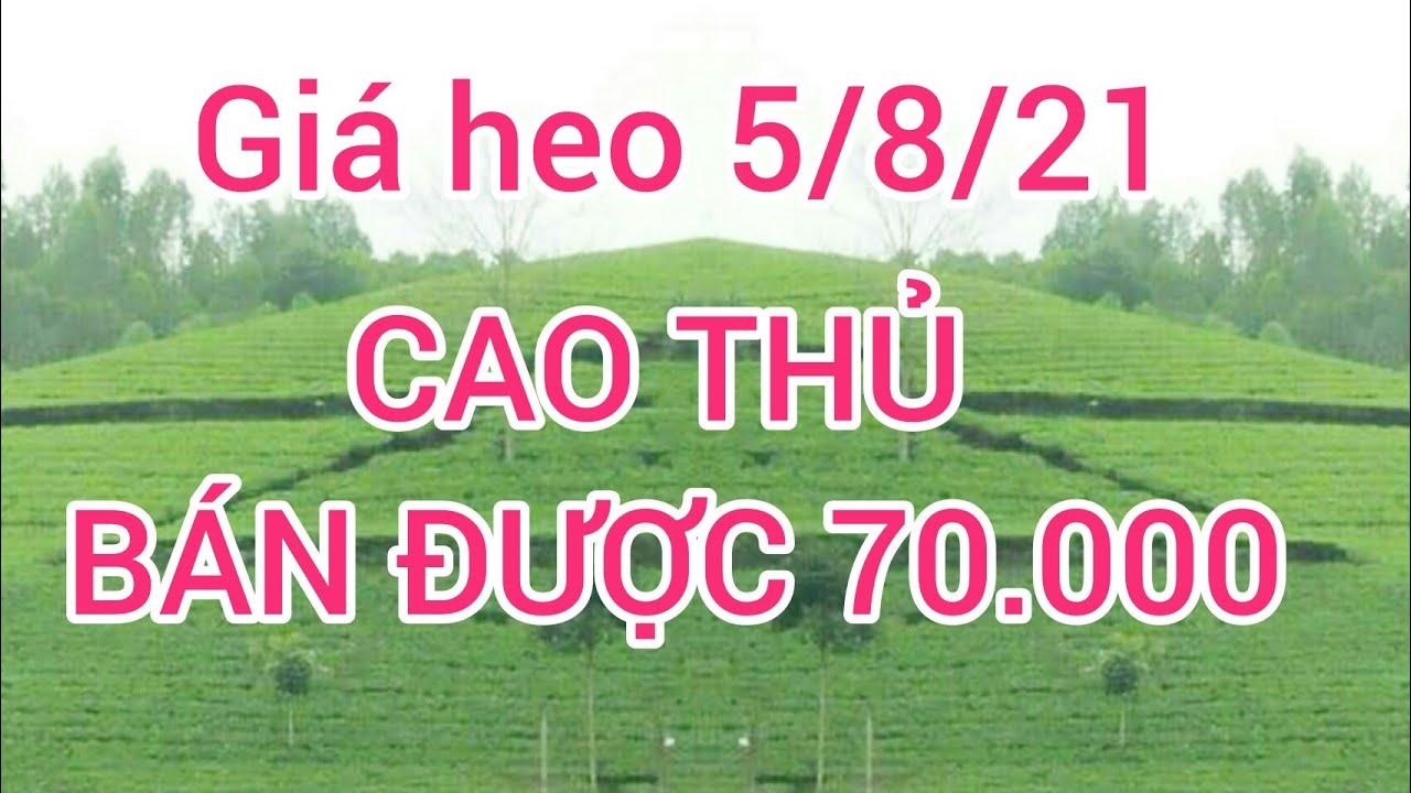 Giá heo hơi (lợn hơi) ngày 5/8/21. Ai bán được 70 nghìn chưa