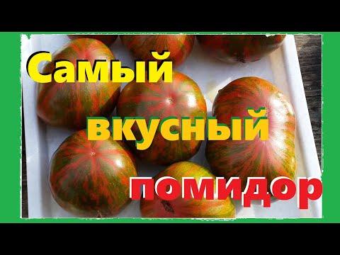 Обзор сортов томатов: цветные черри, Банановые Ноги, Ананас Зебра(Ananas Zebra ), Dwarf Uluru Ochre | годуновский | александров | банановые | годуново | шоколад | харвард | сладкая | бройлер | черная | гроздь