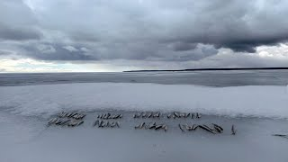 Рыбалка на корюшку в начале весны 2021 Финский залив