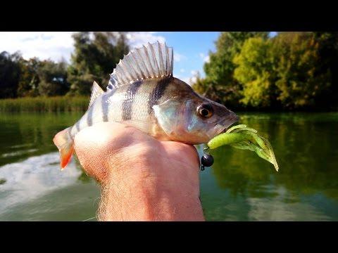 Рыбалка онлайн видео. Смотрите онлайн лучшее видео о рыбалке