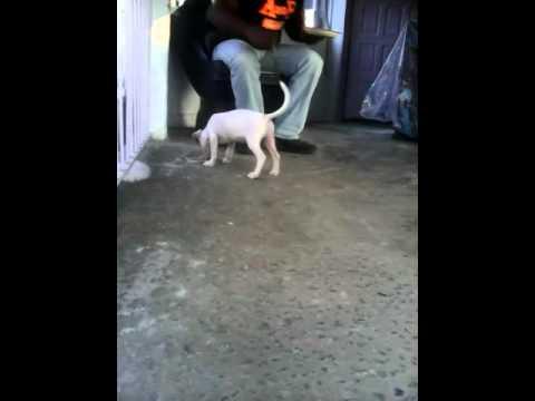 Vkog#2 o cachorro vandori