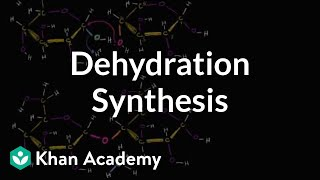 Dehydration synthesis or a condensation reaction | Biology | Khan Academy