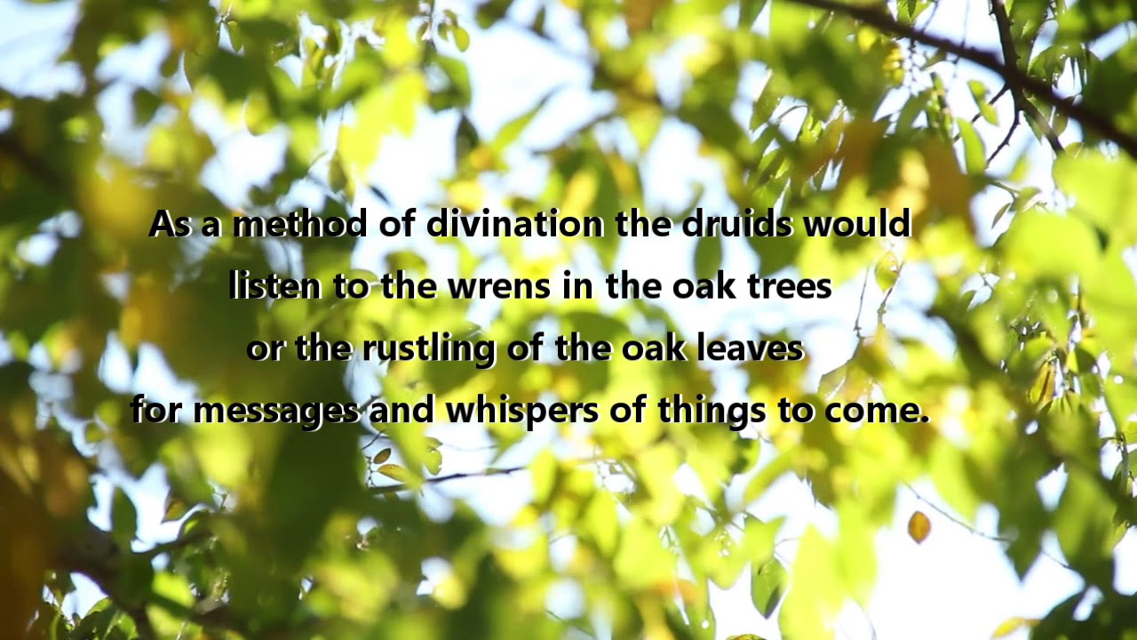 The Magick of the Oak Tree