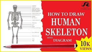 How to easily draw human body skeleton- Sudipan Roy.