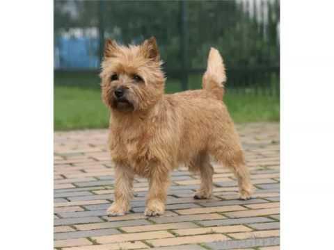 Cairn Dog Names