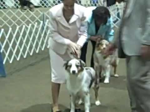 2008 CONFORMATION DOG SHOW ~ Monroe, WA 1 of 3