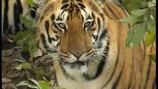 Kanha National Park: Documentary by MPTourism