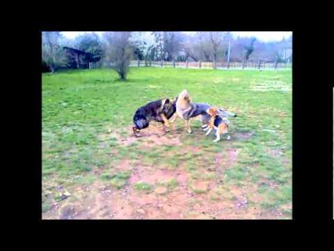 Dog Garden Lupi Allattacco Youtube