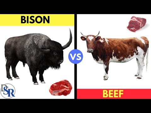 �� The Shocking Truth About Bison (Buffalo) vs Beef (Cow) by Dr Sam Robbins