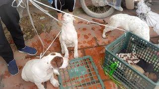 Chợ Chó Mèo Sôi Động Độc Đáo Nhất Việt Nam