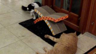 Cats Milo, Munchkin and The Bucca with the new scratcher pad