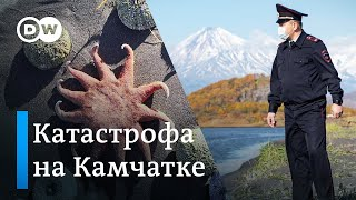 Экологическая катастрофа на Камчатке - какими могут быть последствия?
