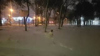 Снег снег снег Американский бульдог Серёга
