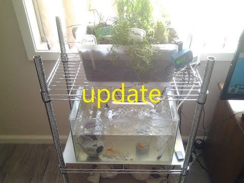 DIY How To Build an Aquaponic System with an Aquarium. Project update
