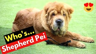 German Shepherd and SharPei Mix (Shepherd Pei): What should you know about this Mixbreed?