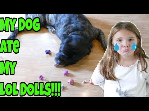 My Dog Ate My LOL Dolls!