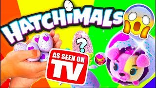 HATCHIMALS COLLEGGTIBLES 🐹 Funzt der As Seen On TV Spielzeugtest?!