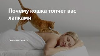 Почему кошка топчет вас лапками // Кошачий массаж что это?