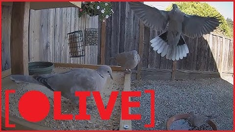 🔴 LIVE NOW Interactive Bird Feeder 🔴 LIVE CAM | Feed the Birds with NANO, BTC, Venmo, PayPal
