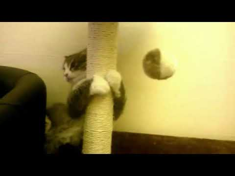 Cat Fails At Catching Ball -  Slow Motion !