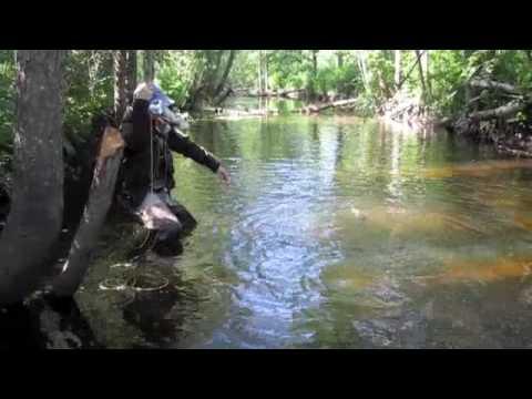 Fly Fishing From Estonia