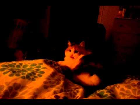 video-2010-10-19-23-09-43