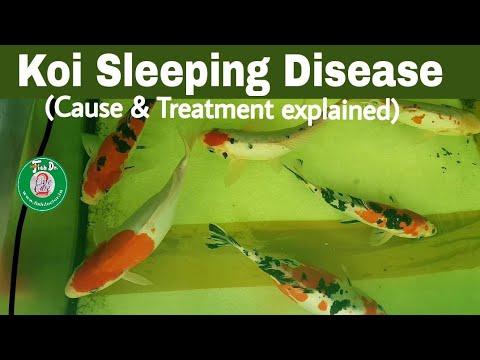 Koi Sleeping Disease _know The Facts