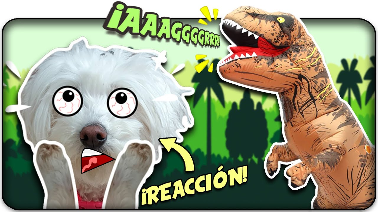 Dasha REACCIONA al T REX! 🦖¿Le MORDERÁ?😱 Anima Dogs