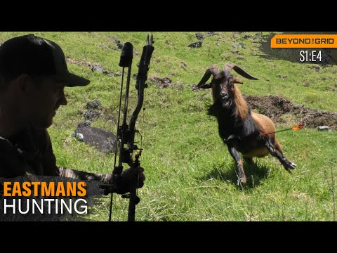 A Bow Hunting Paradise! Hunt Hawaii: Axis Deer, Pigs & Goats
