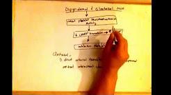 Dipyridamole and cilostazol mechanism of action - antiplatelet