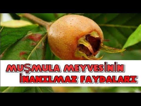 Muşmula (Döngel) Meyvesinin İnanılmaz Faydaları