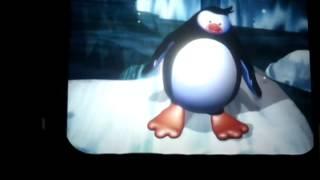 Ocean Park Penguin Talk Show