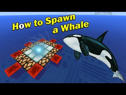How to Spawn a WHALE | Minecraft PE