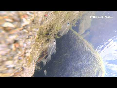 Racing Drone sleeps with the fishes - HeliPal.com
